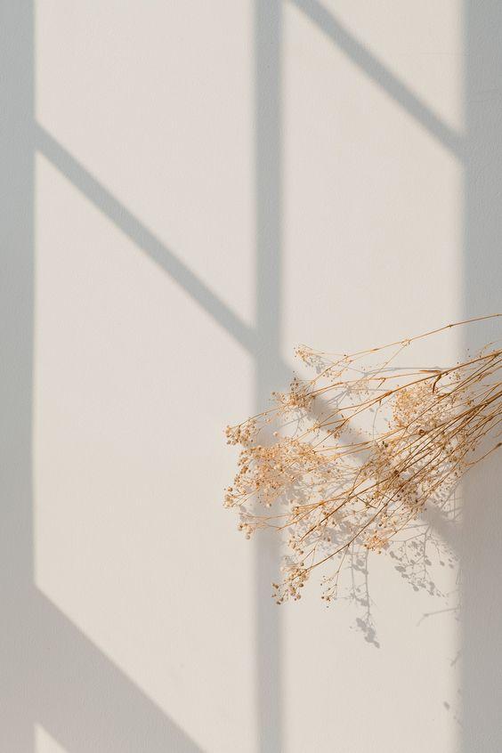 Minimalisme fleur séchée devant mur blanc avec reflet sur soleil